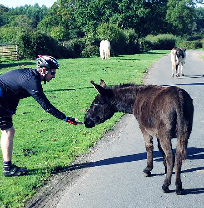 A New Forest pony enjoying a chat with cyclist Robbie.