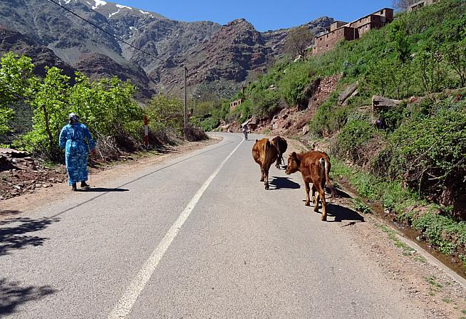 The route takes in scenes of rural Moroccan life.