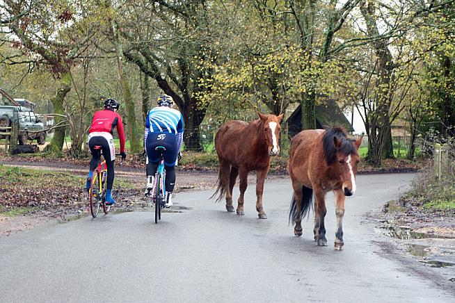 The occasional loose horse is all part of the charm of riding through the New Forest.