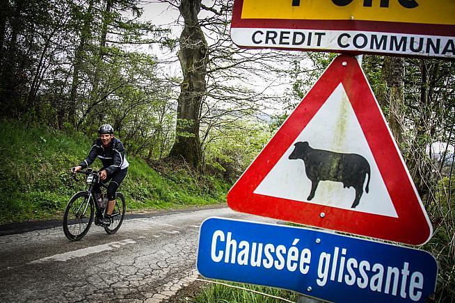 Beware slippery cattle. Photo: Sportograf