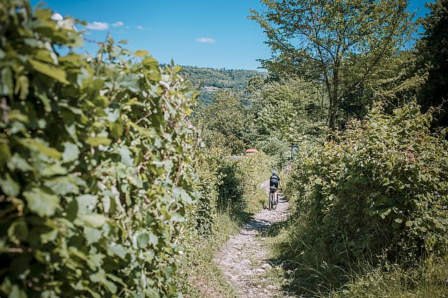 The course leads riders through the region's famous vineyards.